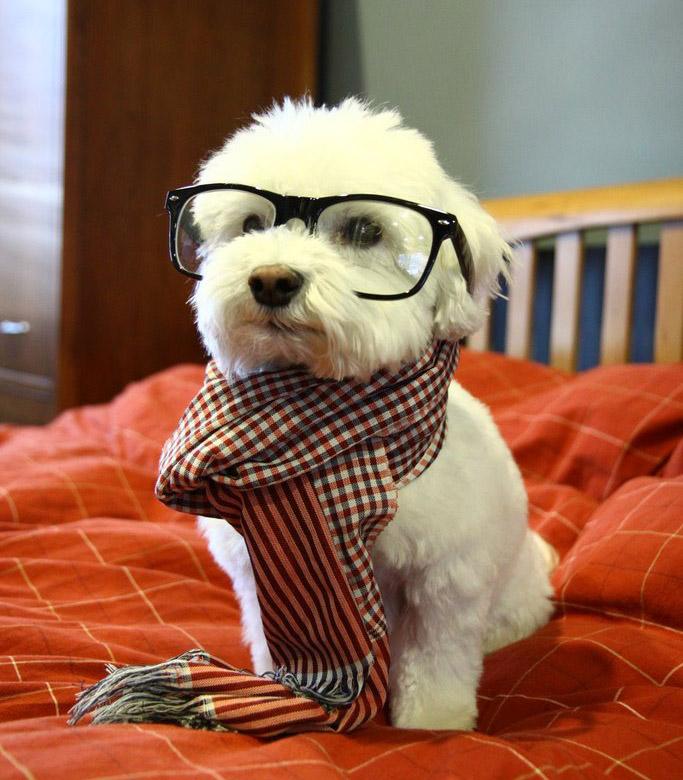 Прикольные картинки фотки на аватарку собаки